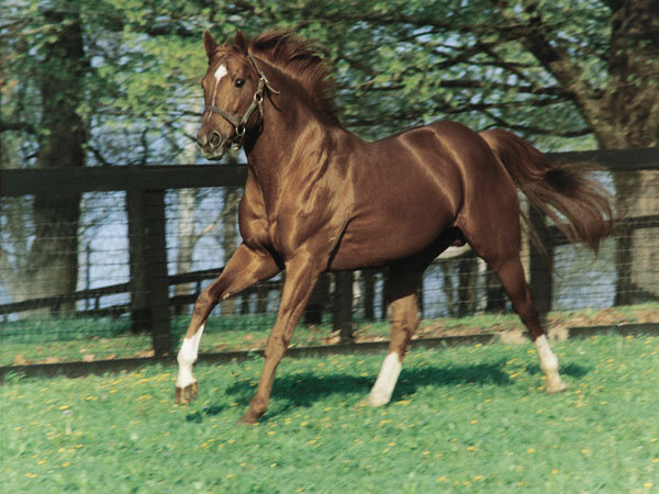 Secretariat, King of Horses