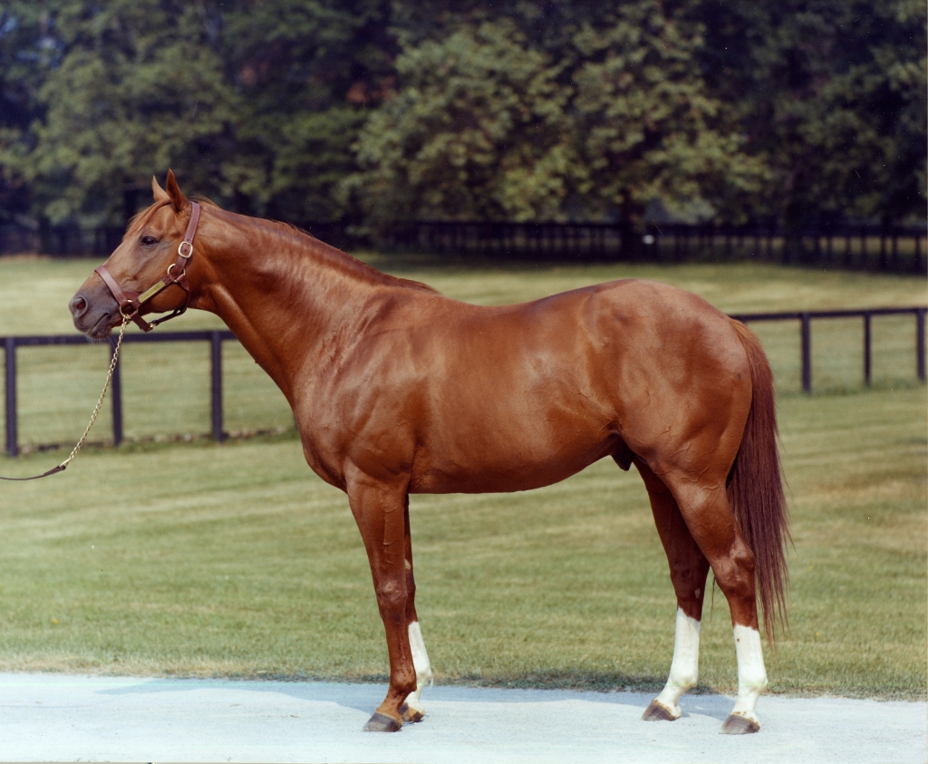 In my eyes of an artist, Secretariat is the most perfect horse