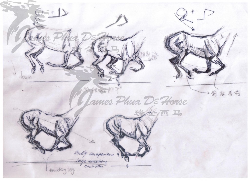 Horse sketch by James Phua 04