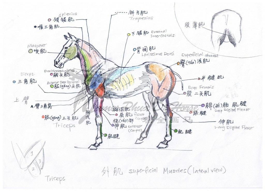 Horse sketch by James Phua 08